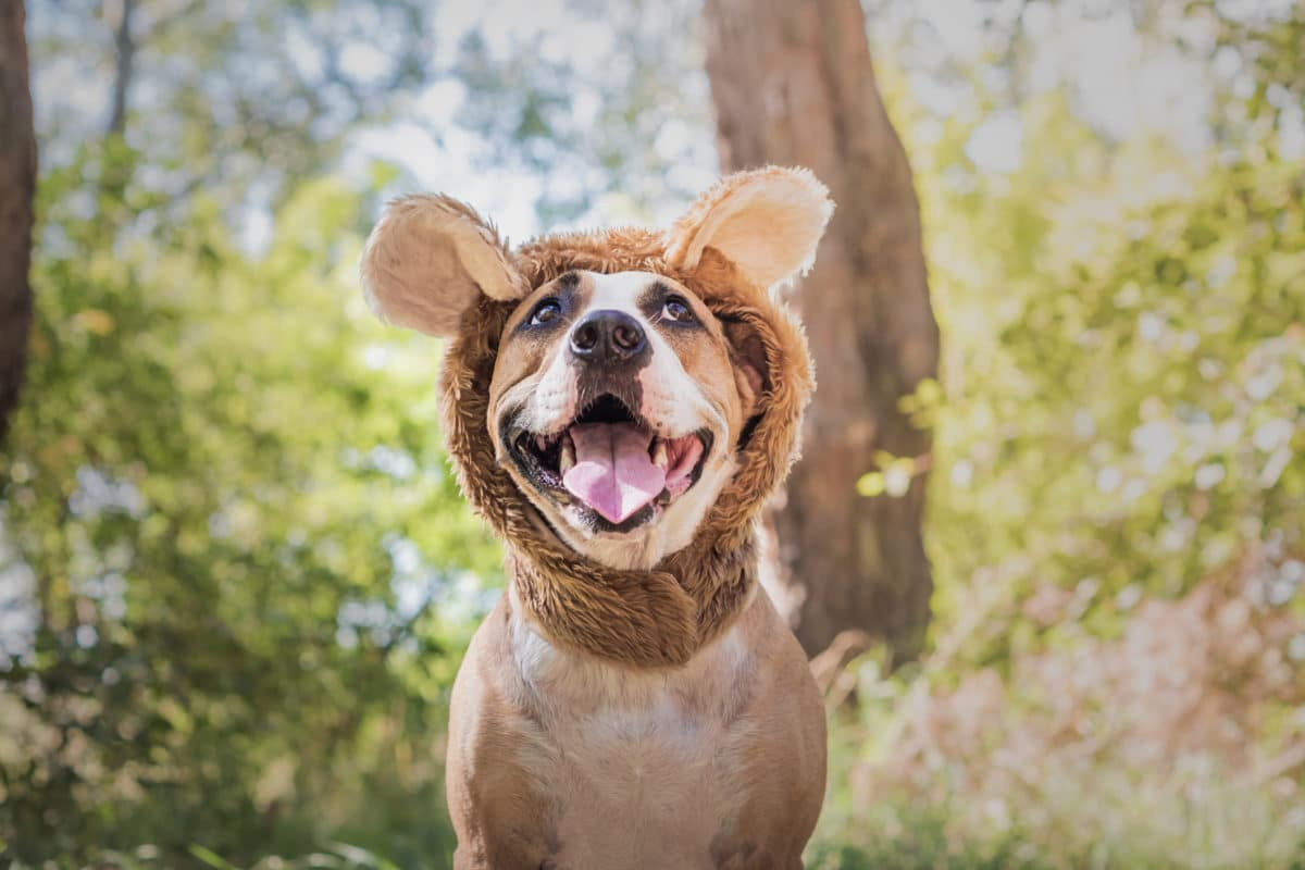Funny dog portrait in bear hat photographed outdoors.