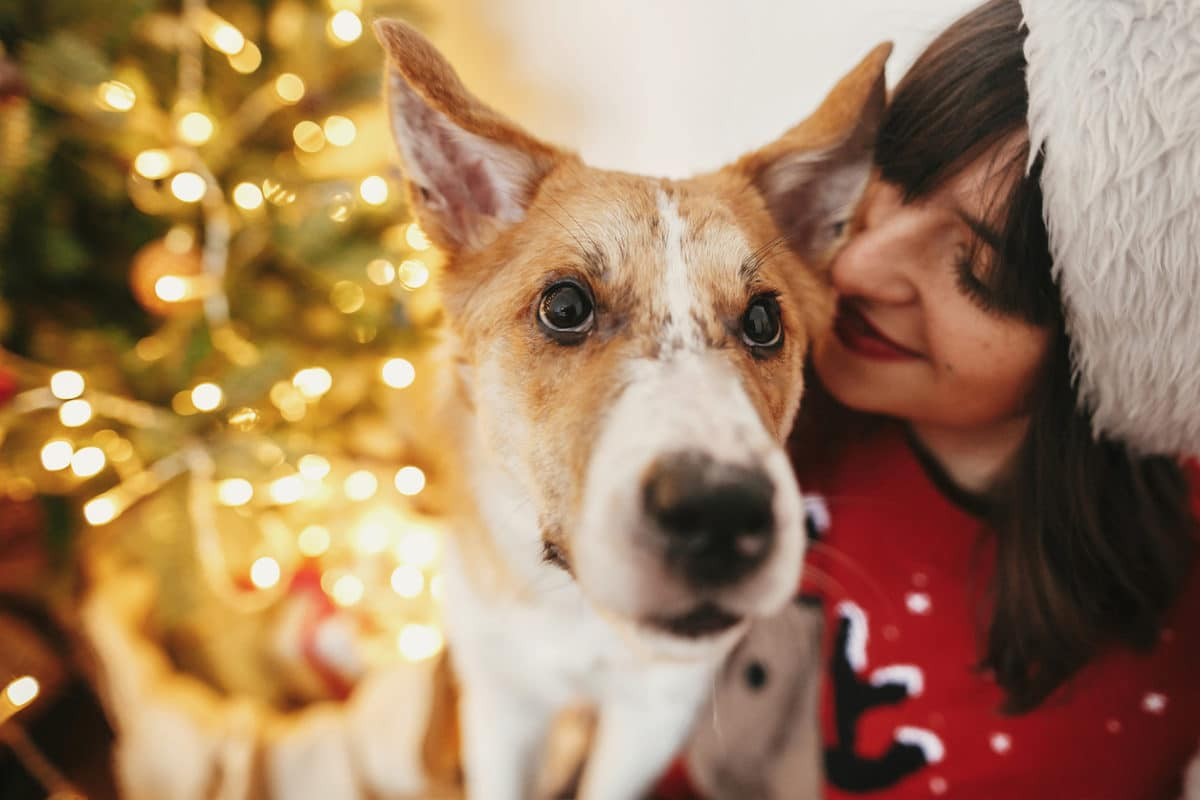 Happy girl in santa hat hugging with cute dog on background of golden beautiful christmas tree with lights in festive room. family warm atmospheric moments. winter holidays