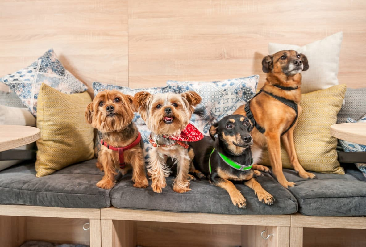 Four funny cute dogs ex abandoned homeless adopted by good people and having fun on the pillows in the pet shop enjoying new life selective focus