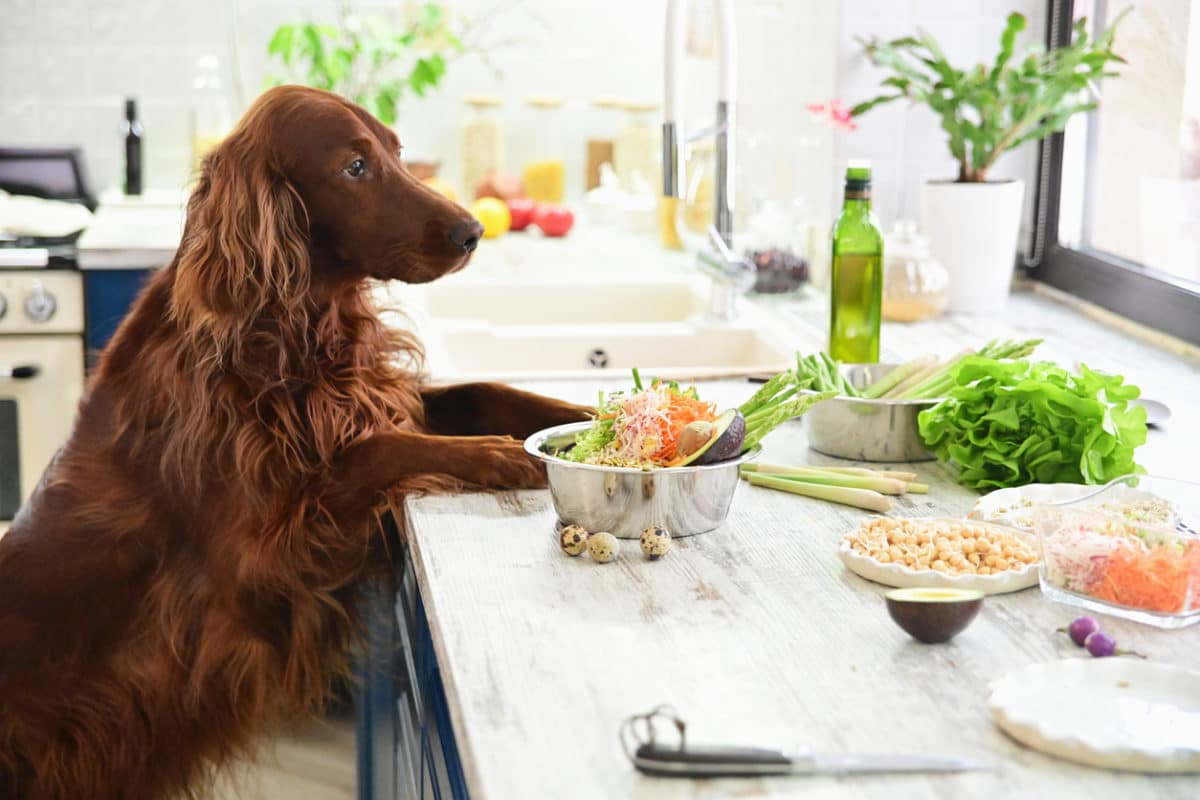 Cooking vegetarian food for Pets. In interior.