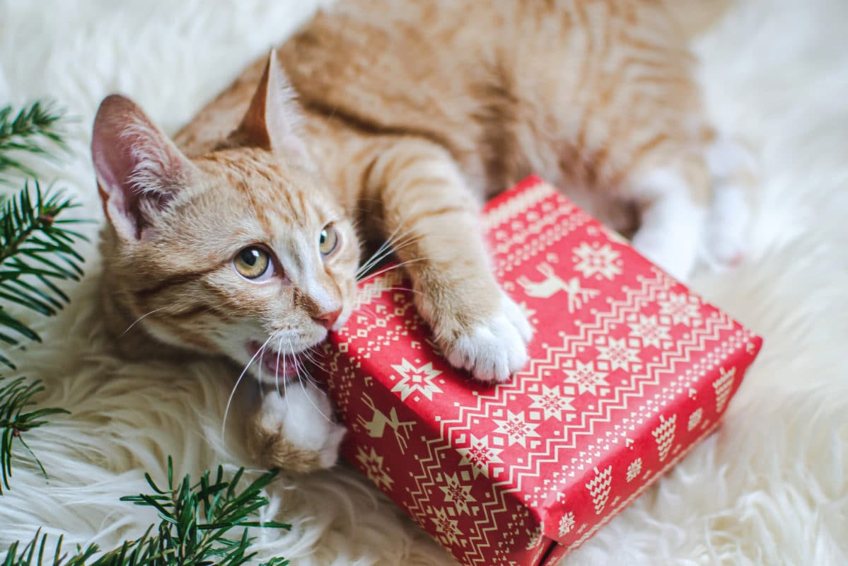 Cute little ginger kitten laying in soft white faux fur blanket, holding red paper gift box Christmas New Year Concept vintage