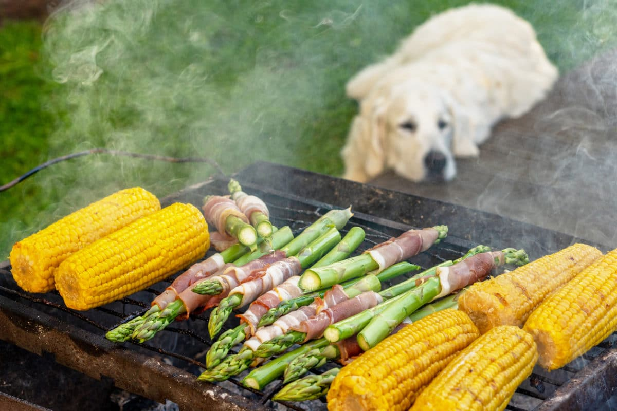 Gourmet barbecue. Grill veggies - corn, asparagus with bacon and prosciutto. Golden retriever napping during family barbeque in the backstage of summer terrace.